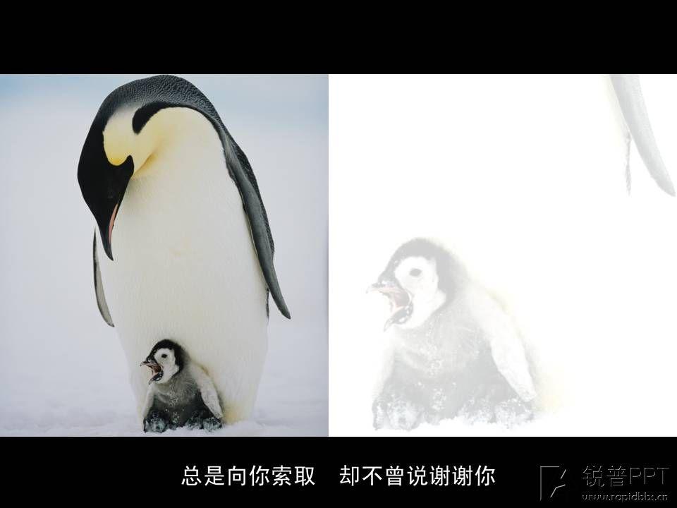 筷子兄弟 父亲 真情献映 原创ppt作品 锐普ppt论坛
