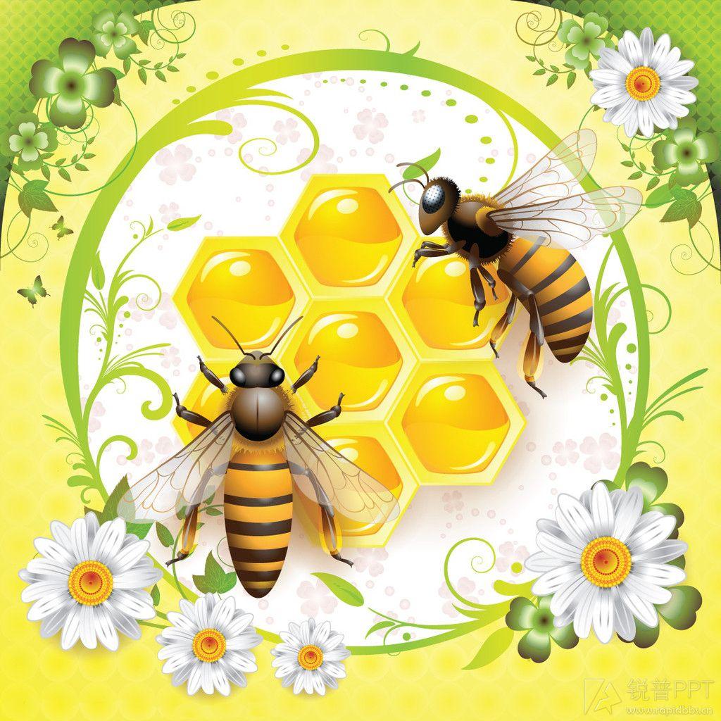 蜜蜂与蜂蜜(25p) - 图片素材 - 锐普ppt论坛 -  by